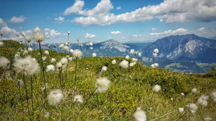 Alps-Plant--CherliasCom