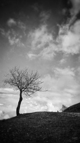 Der-Baum-by-CherliasCom
