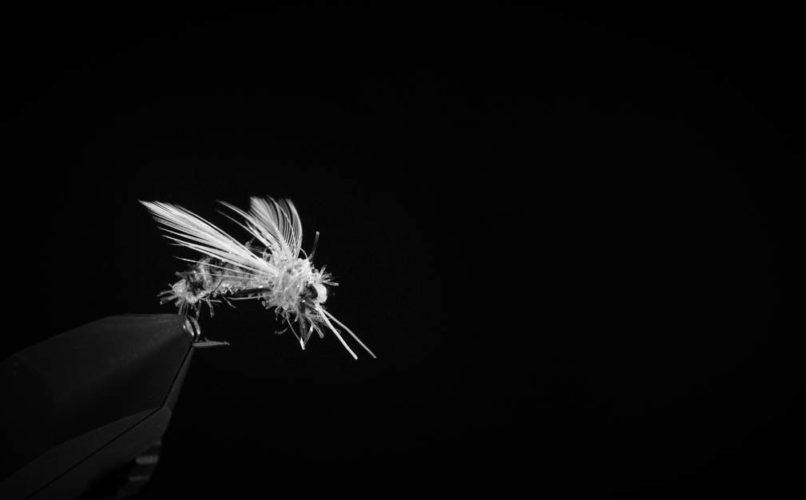 Flieg-Biene-4-BW